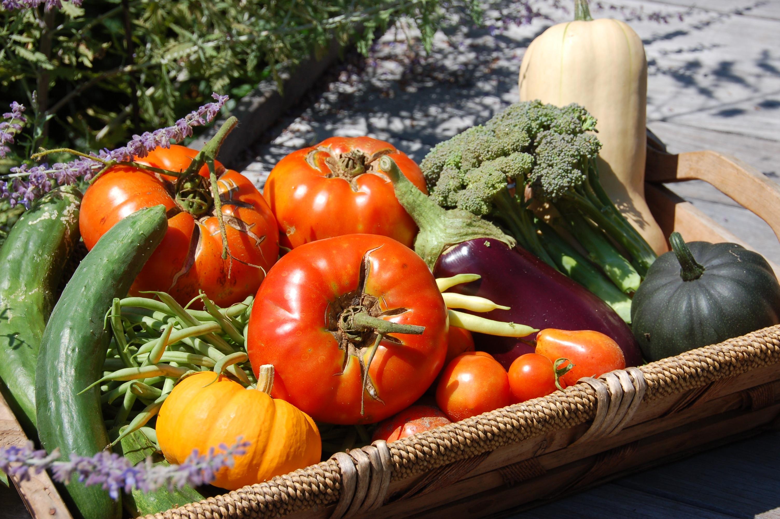Garden in august in a garden - Categories August Garden Vegetable Gardens Vegetables Tags Broccoli Squash Summer Tomatos Permalink